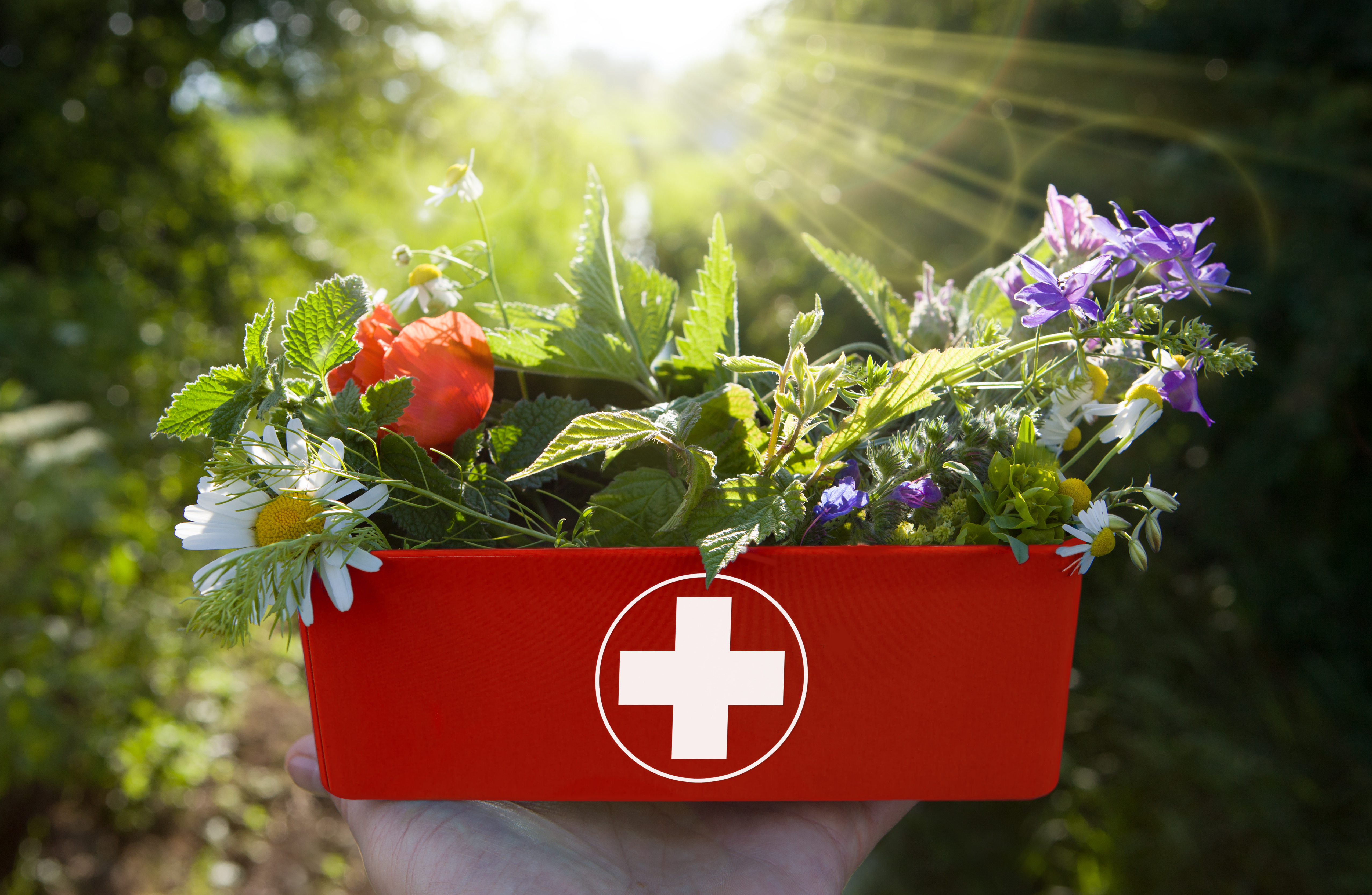 First aid kit filled with plants