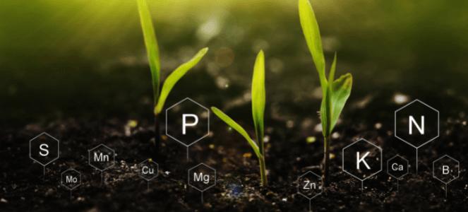 Nitrogen, Phosphorus and Potassium are essential nutrients for plant growth