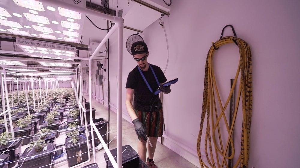 Artisan Grown using the Bluelab Combo Meter