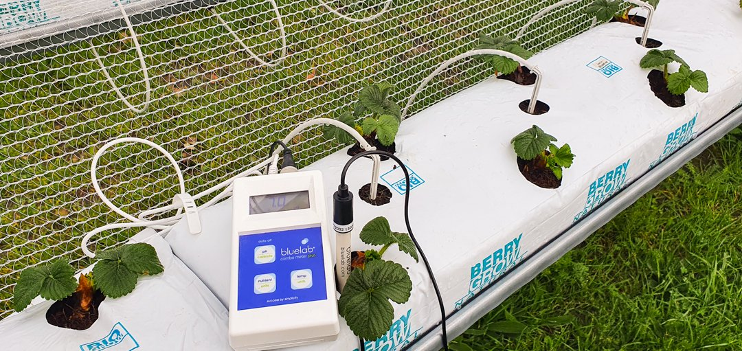 The Bluelab Combo Meter Plus in action at Black Stump Berry Farm
