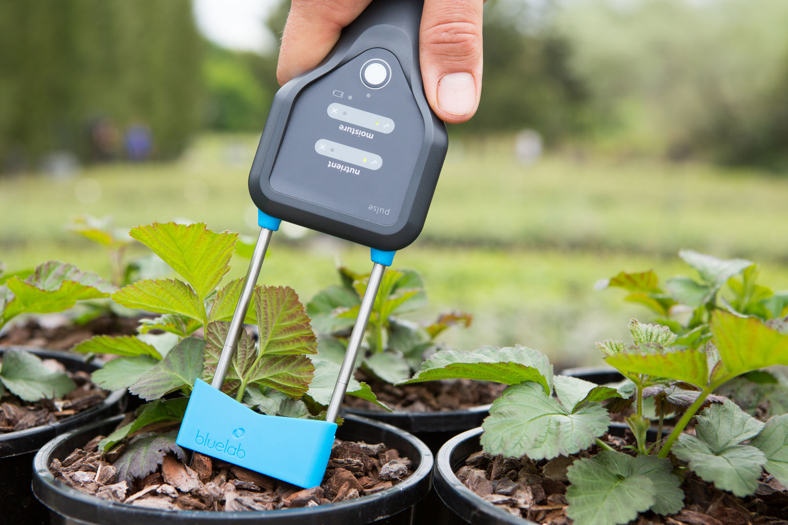 The Bluelab Pulse Meter taking a reading in soil