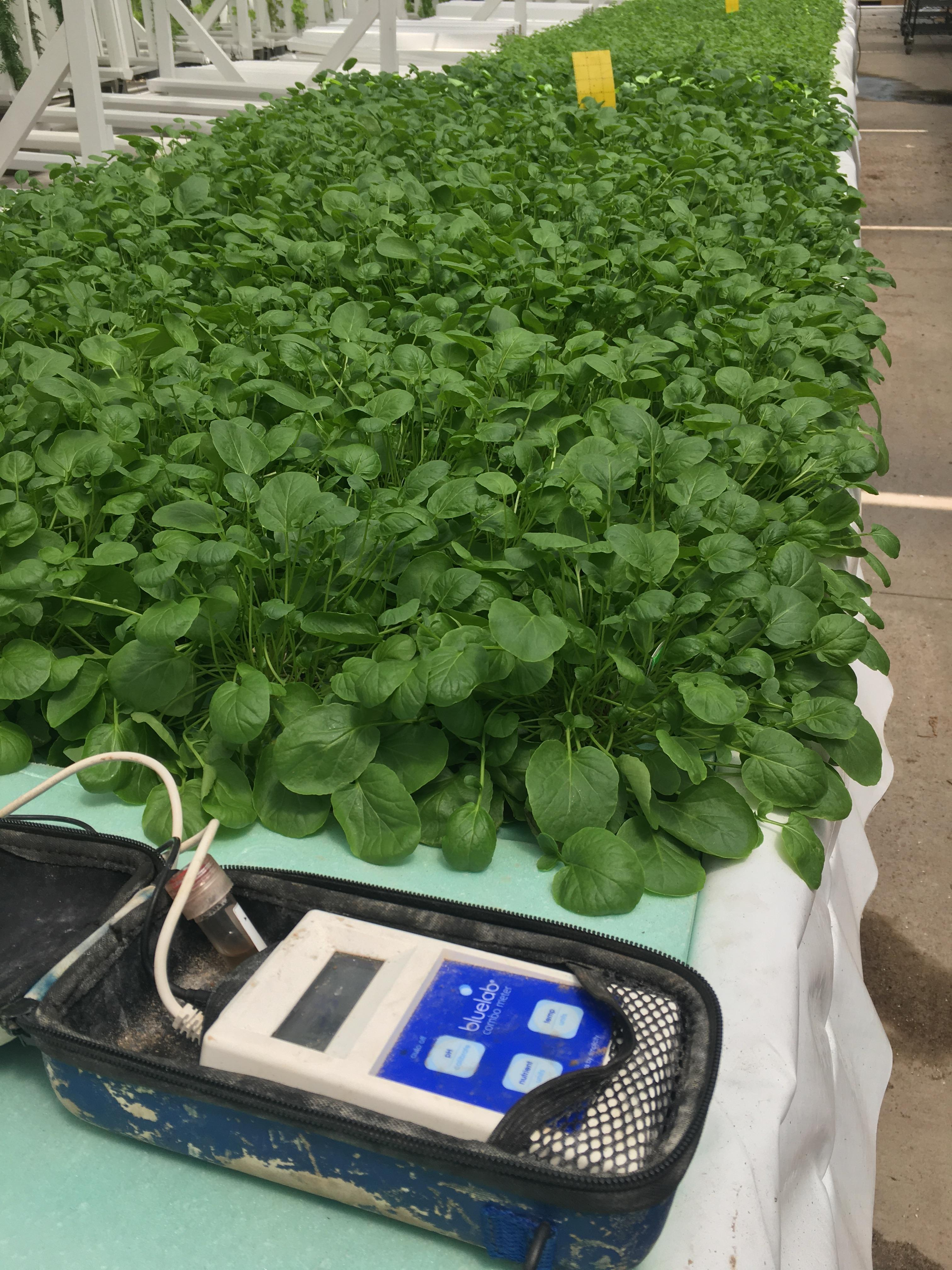 Bluelab Combo Meter in use at CRG Grow