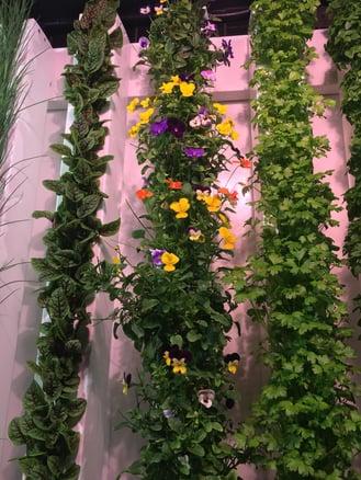 Vertical greens at CRG Grow