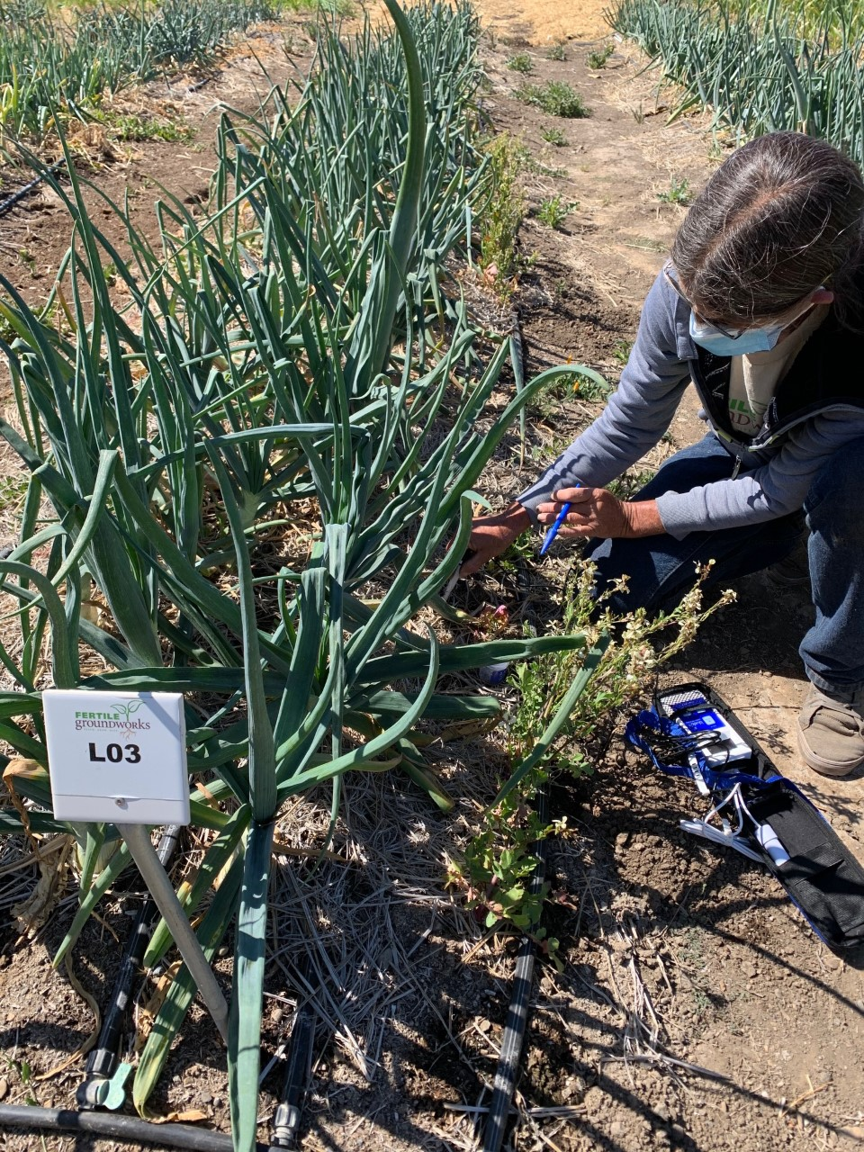 Harvesting in the Bluelab-sponsored plant bed at Fertile GroundWorks