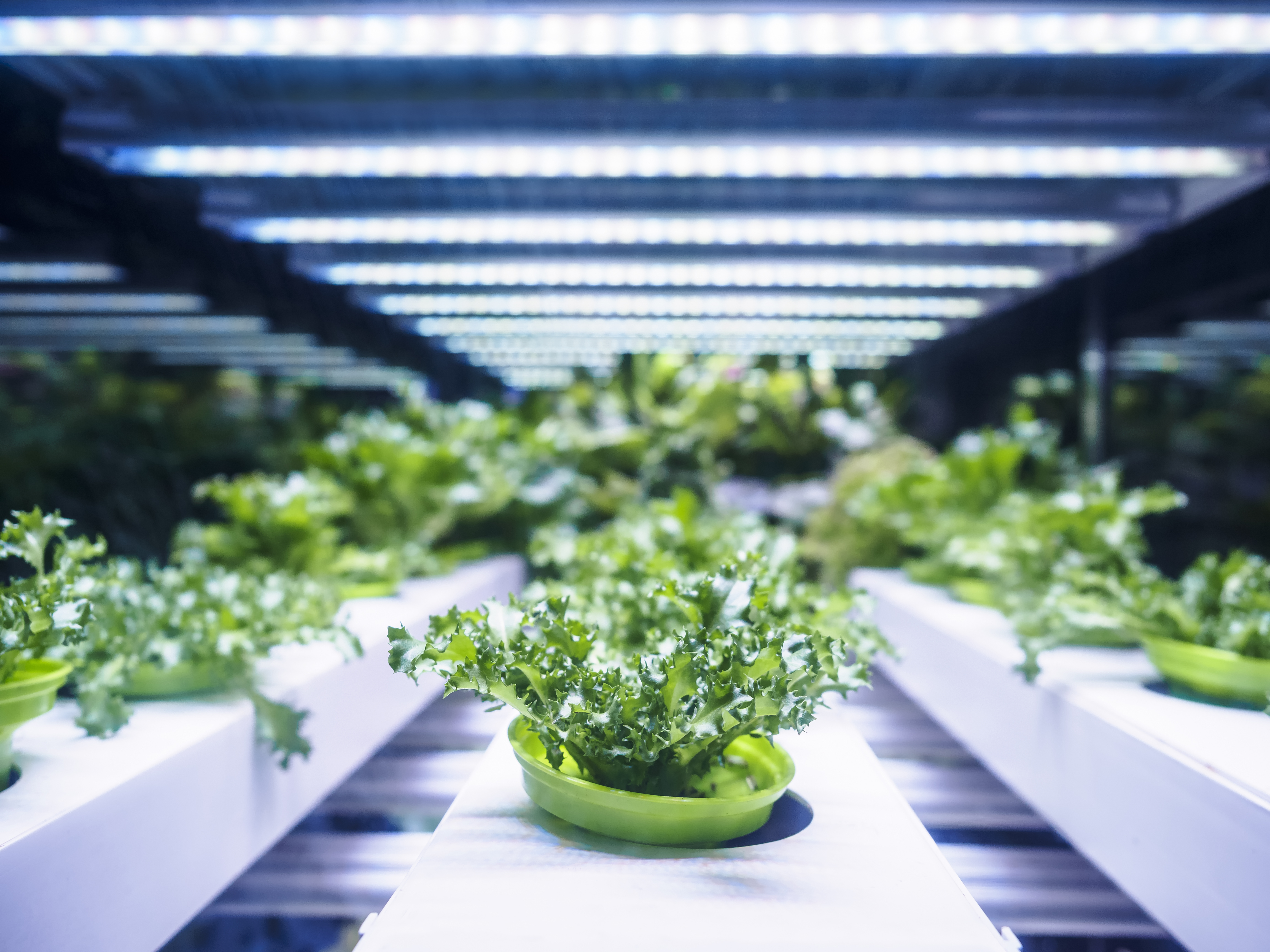 Hydroponic setup with artificial light