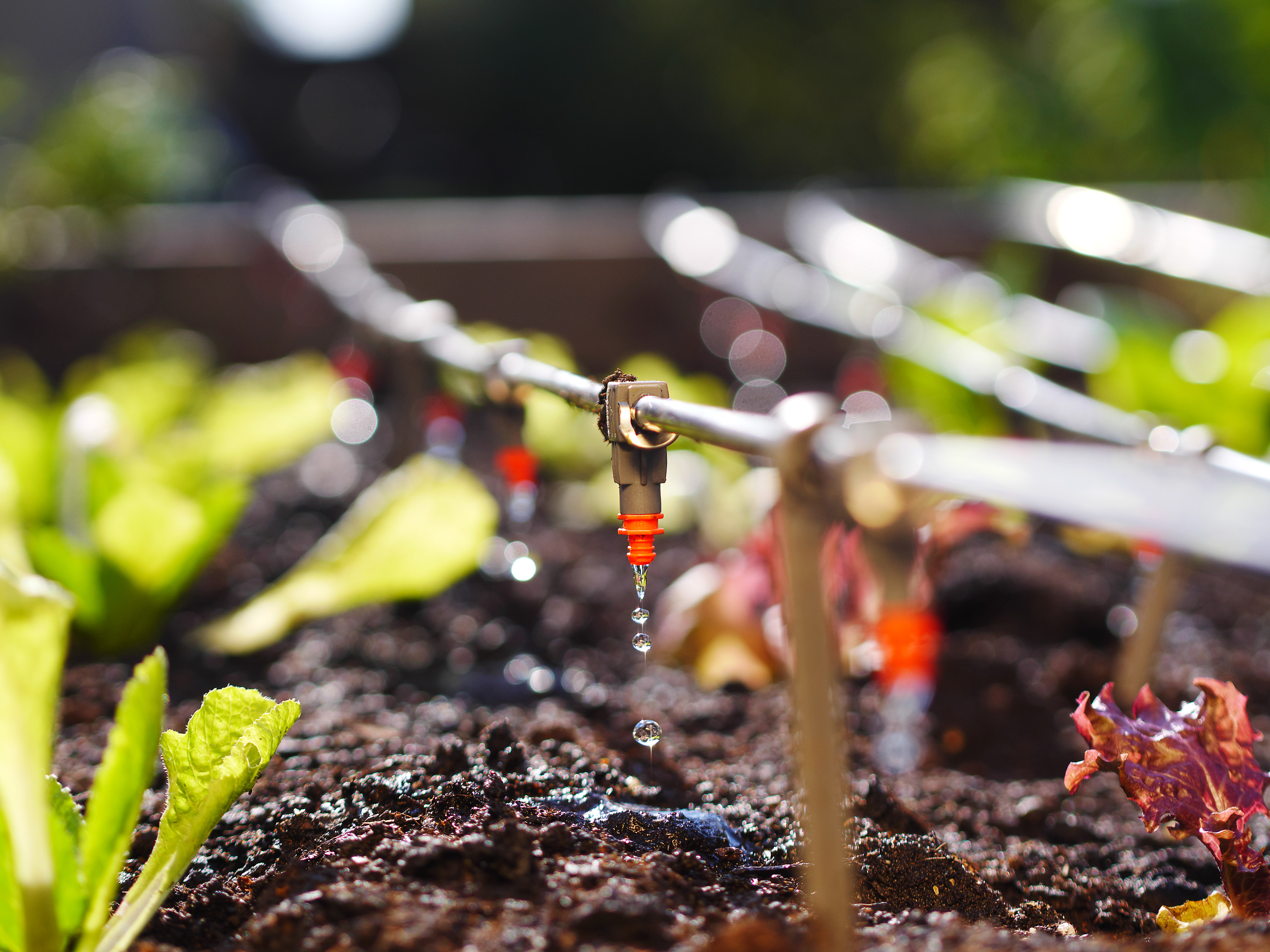 Automatic drip irrigation at a soil-based farm