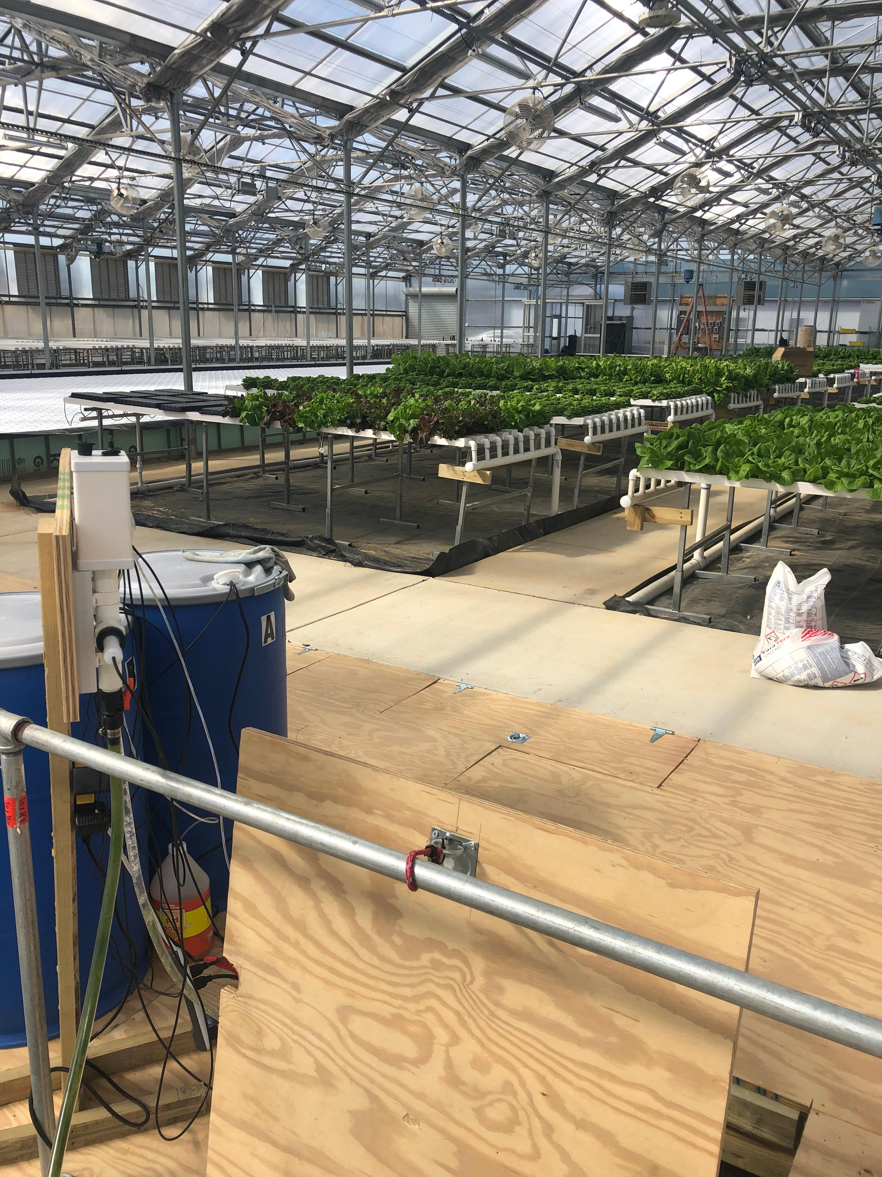 Inside the greenhouse at Mary's Land Farm