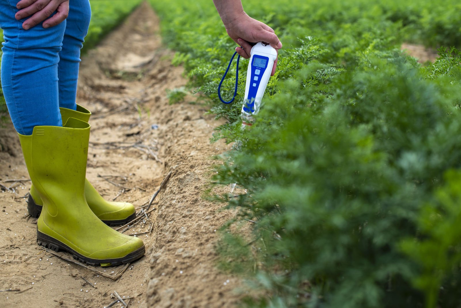 Measuring pH with a Bluelab Soil pH Pen