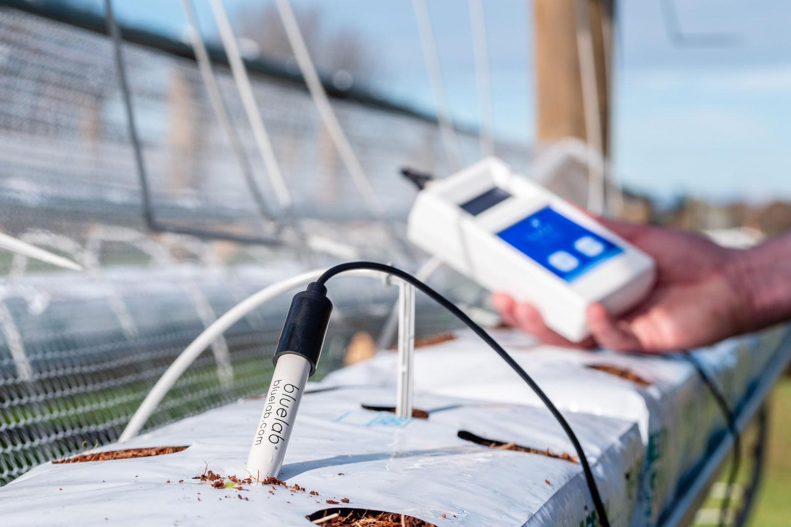 Measuring root zone pH