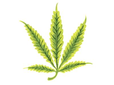 Cannabis leaf showing signs of nitrogen nutrient deficiency