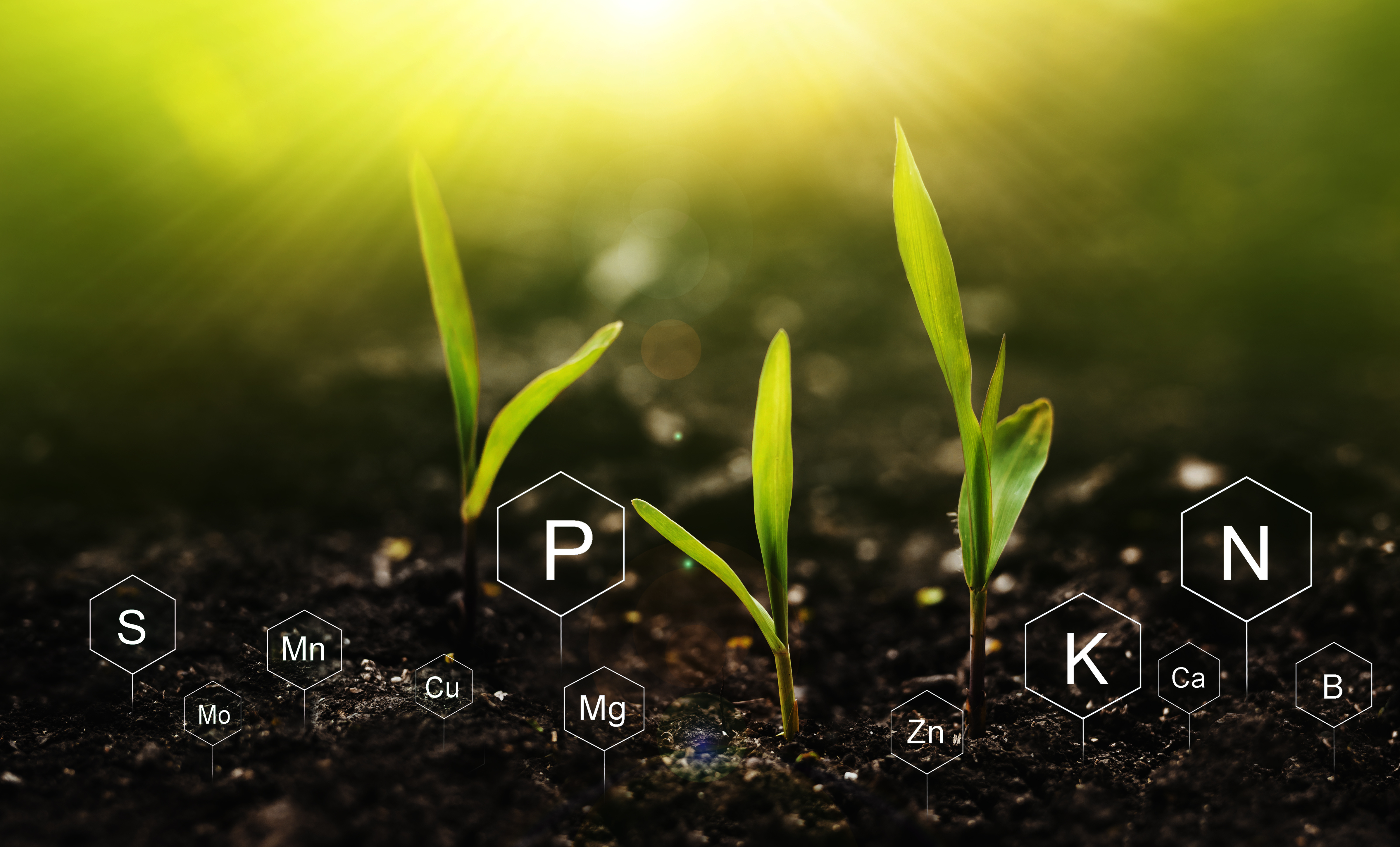 Young plants grow in soil with symbols of essential nutrients superimposed on the image