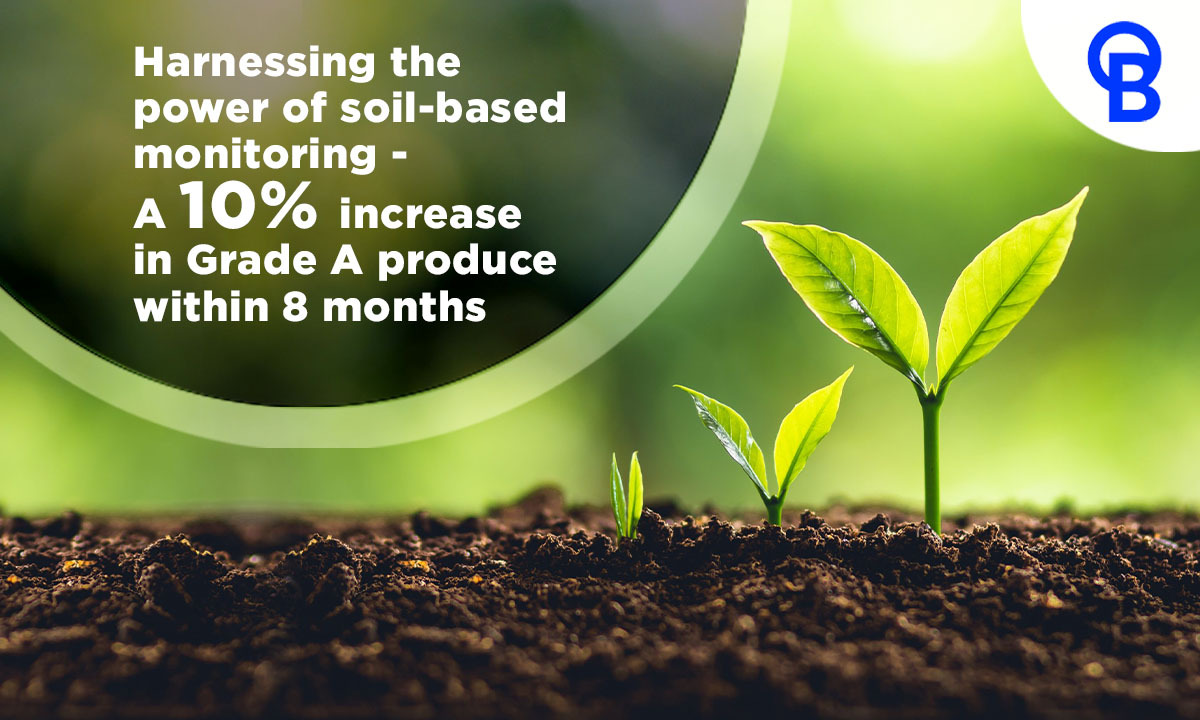 Harnessing the power of soil-based monitoring - A 10% increase in Grade A produce within 8 months