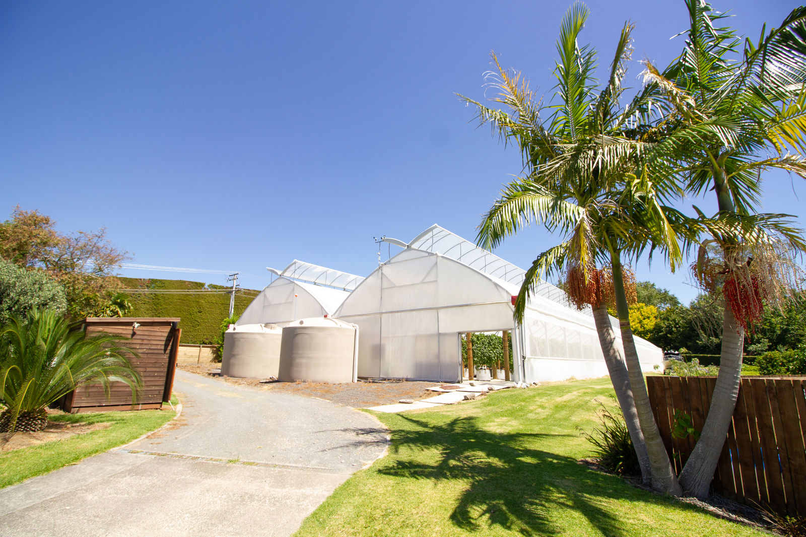 The CEA greenhouse at Scott Pilcher's farm
