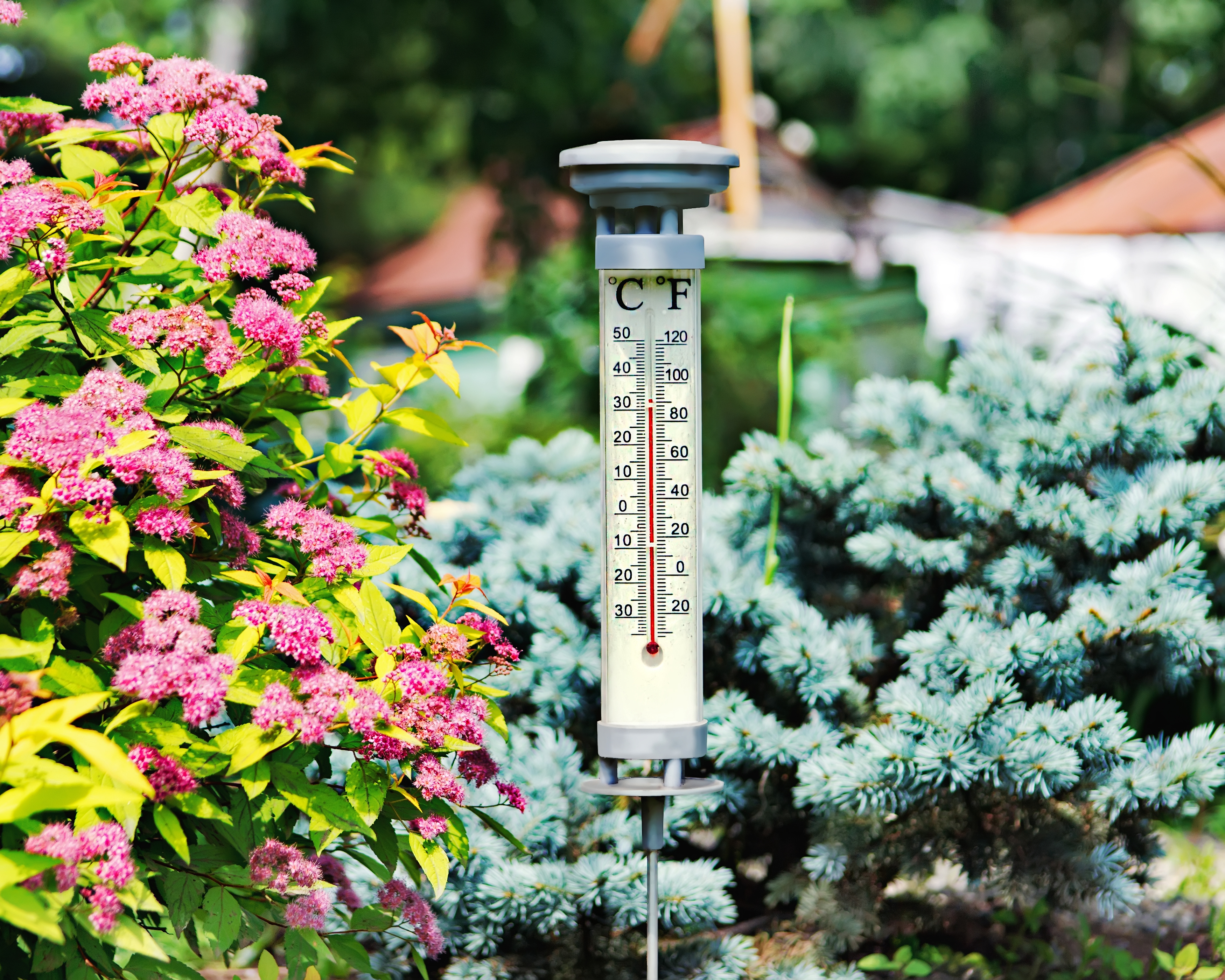 A temperature gauge stands in a colourful outdoor garden