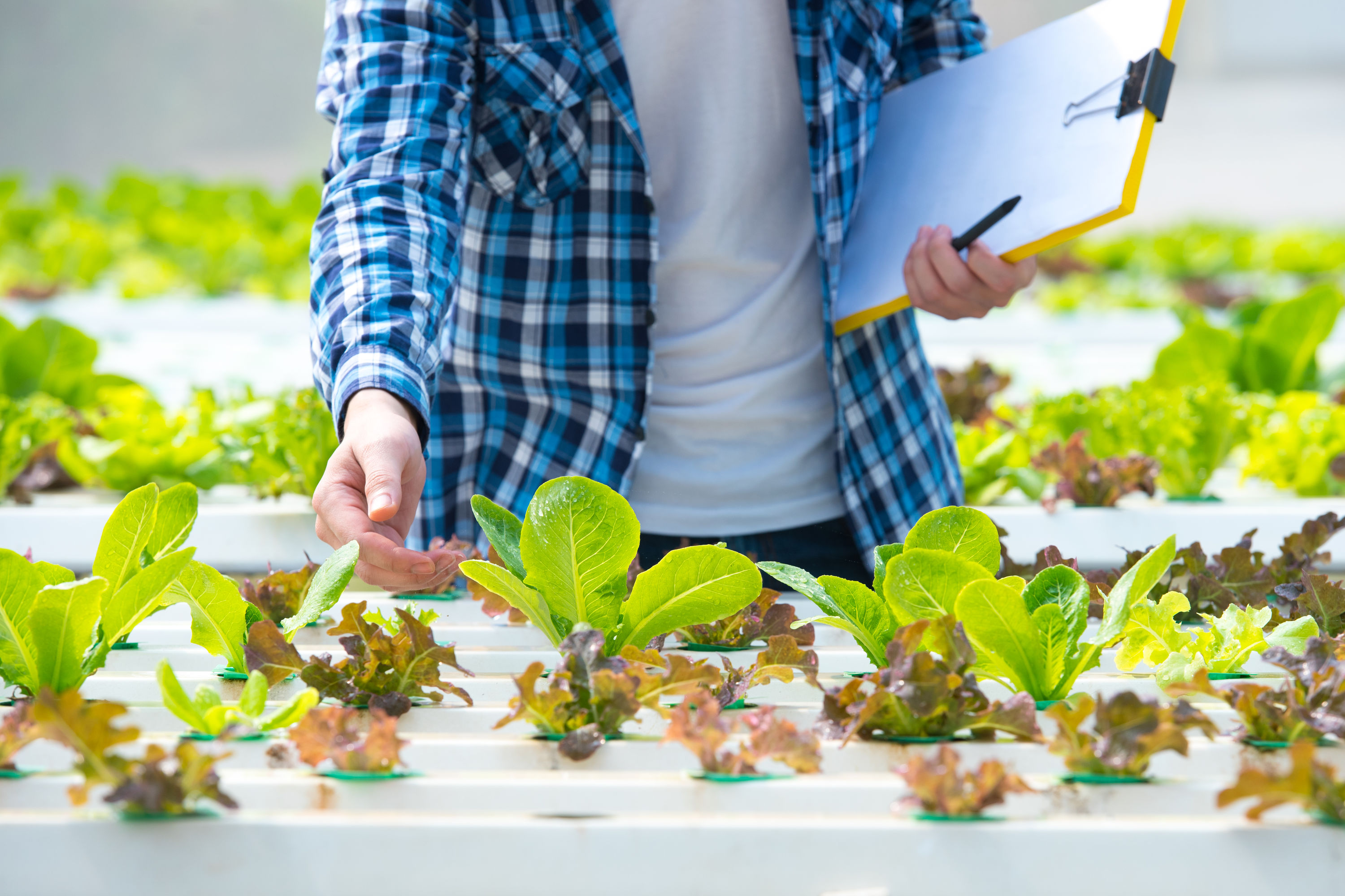 Inspecting growing plants in a hydroponic setup