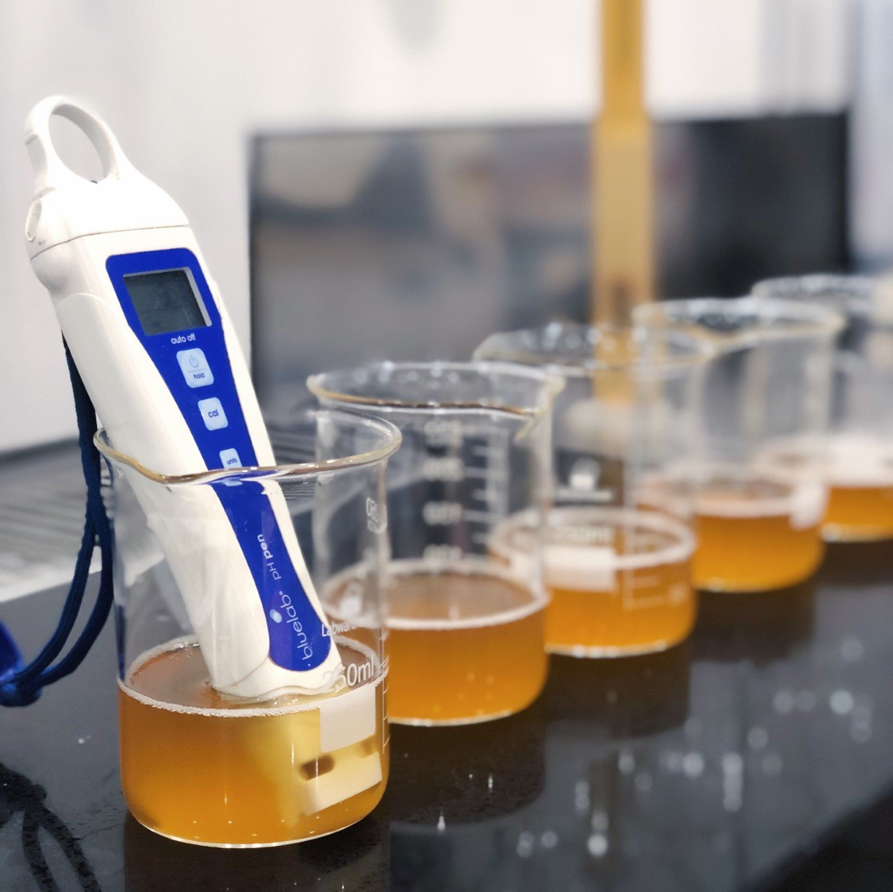 Testing kombucha with the Bluelab pH Pen