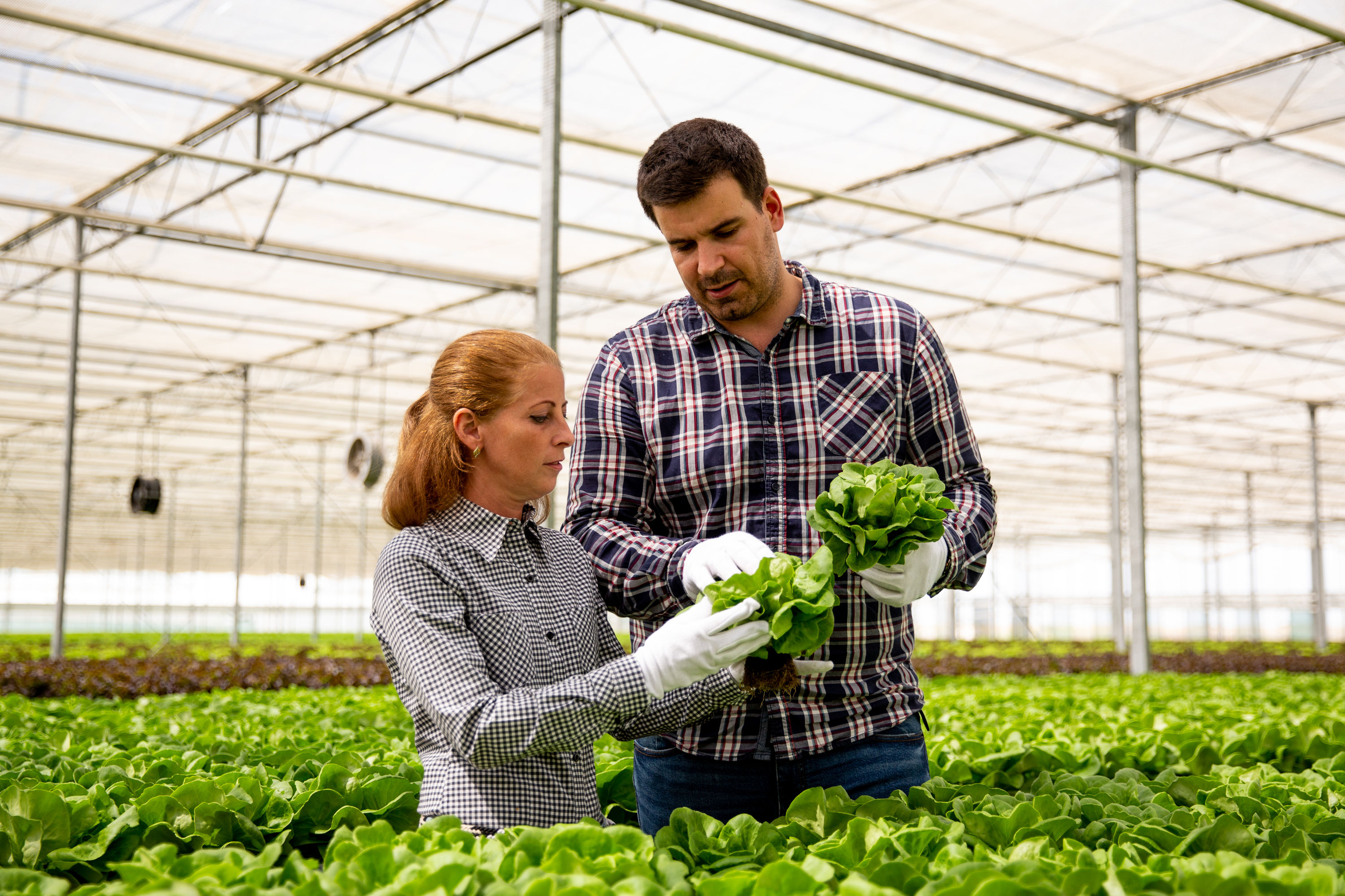 Two researchers inspect plants in a hydroponics greenhouse