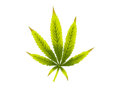A cannabis leaf showing signs of nutrient burn