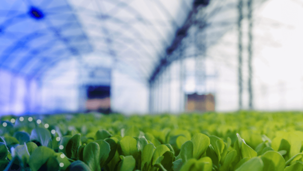Reducing indoor farming's environmental impact by 74%