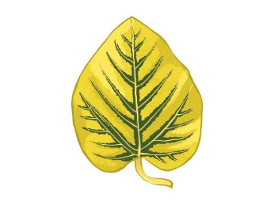 Leaf showing a manganese nutrient deficiency