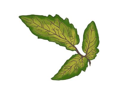 Leaf showing a sulfur nutrient deficiency