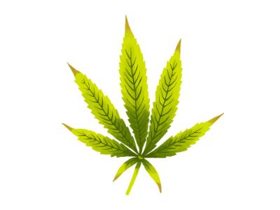 Leaf showing a zinc deficiency
